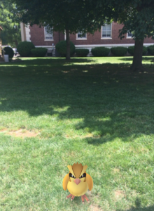 "A wild  Pokémon, ""Pidgey,"" appears in front of the Old Effingham Outhouse"